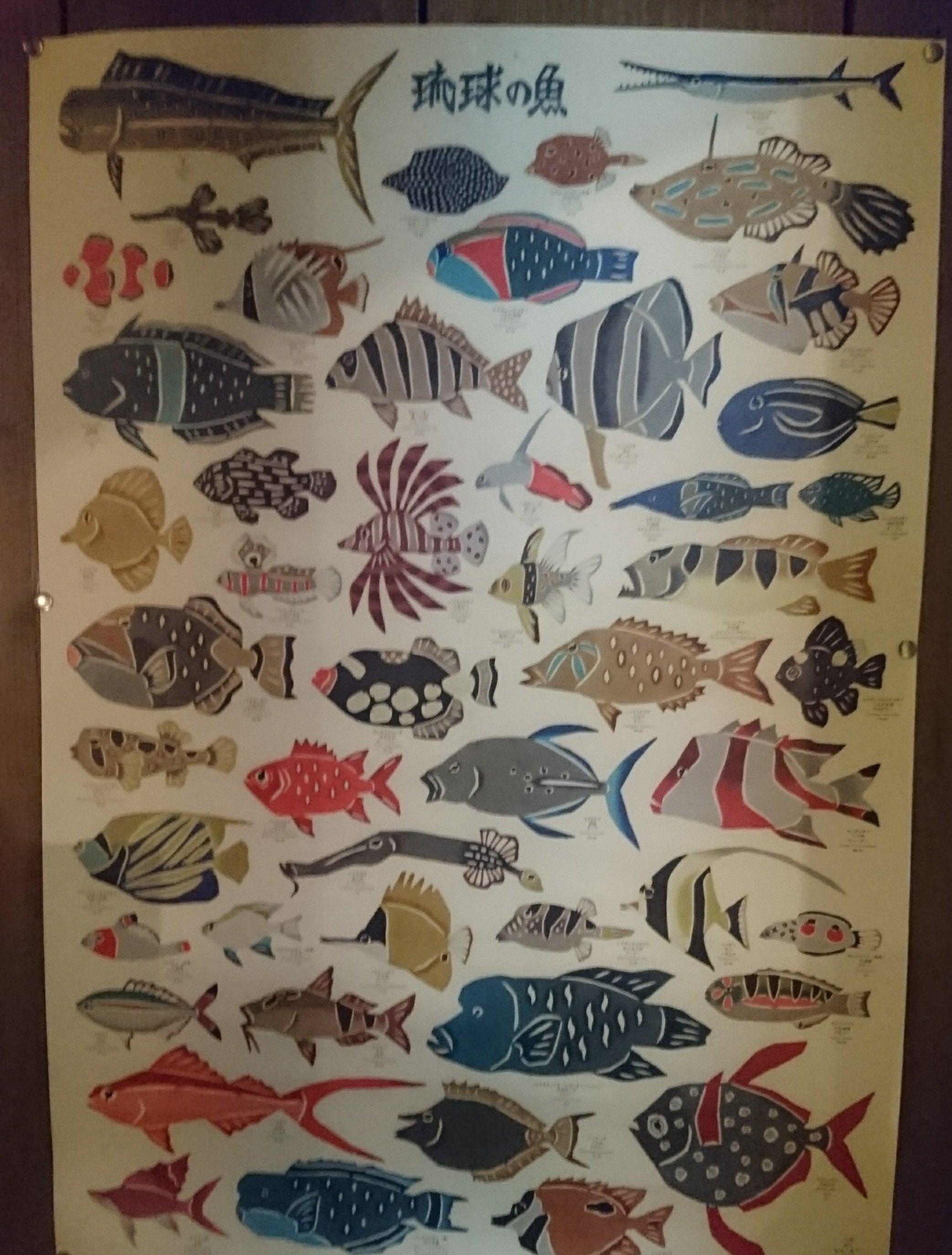 琉球の魚.jpg